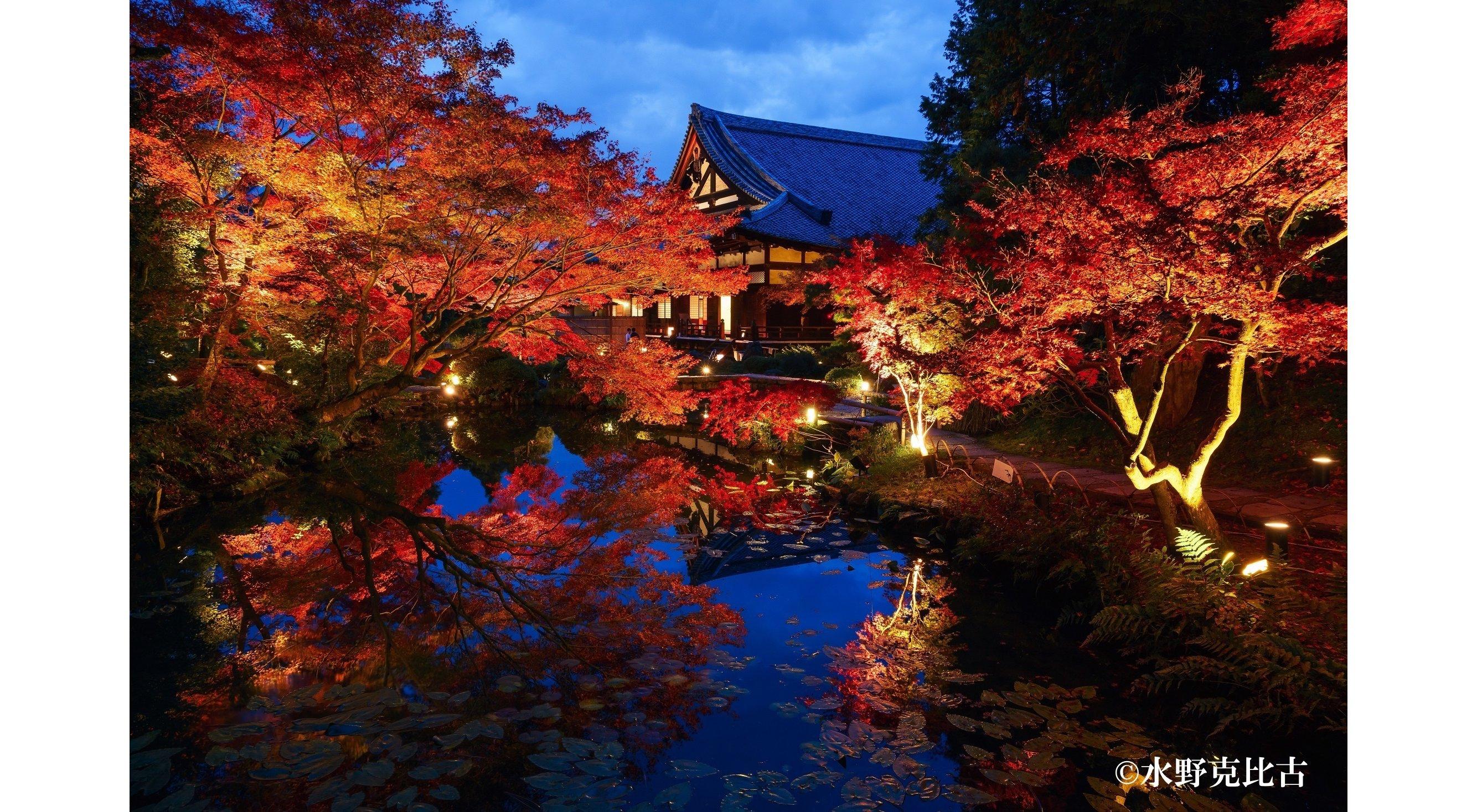 通常非公開の京都・くろ谷 金戒光明寺 秋の特別拝観を開催1